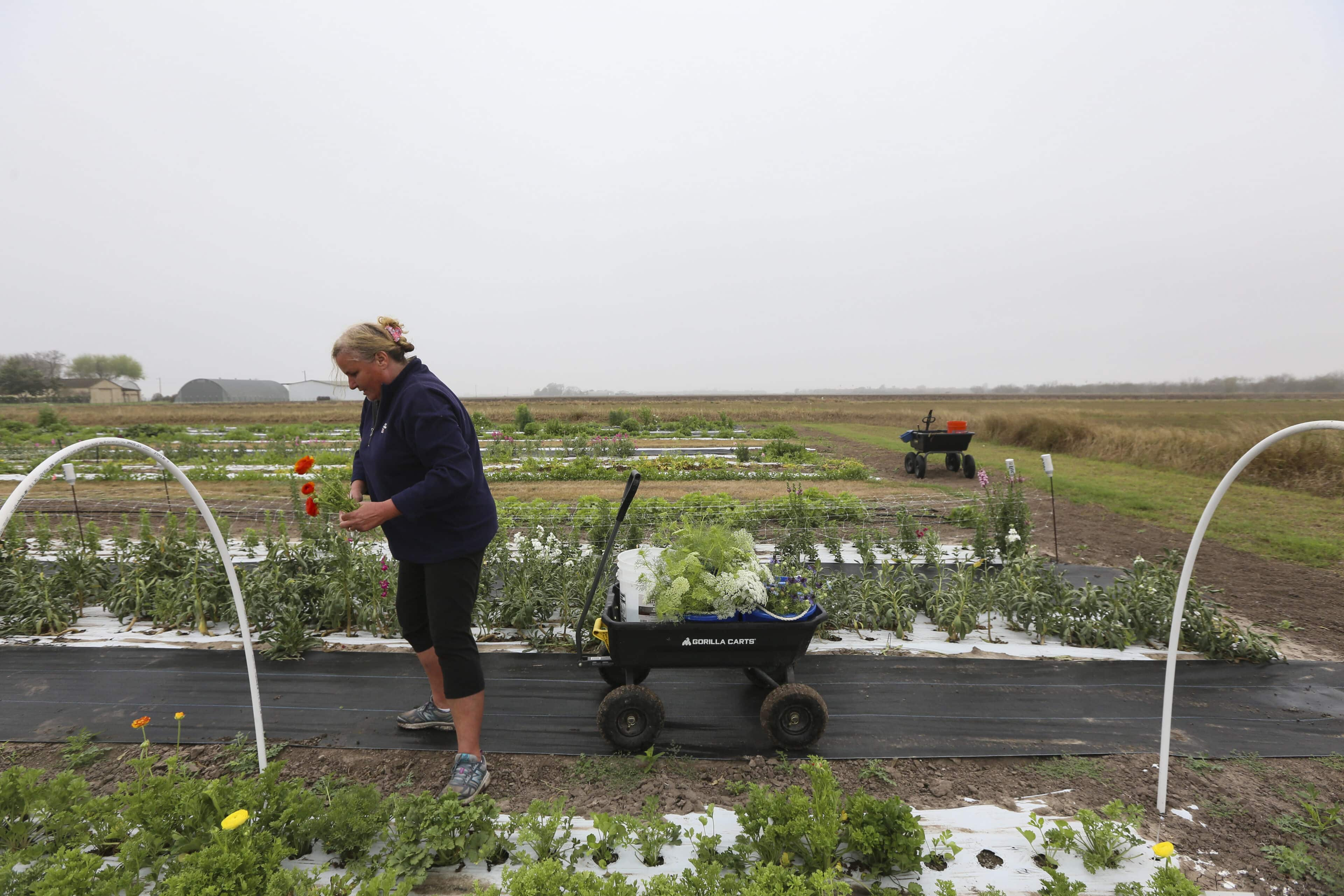 Mother Nature's sting: Flower farm hurt by deep freeze | MyRGV.com